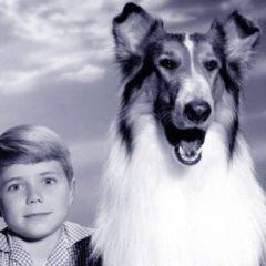 Ciao, Lassie